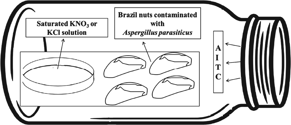 Fumigation of Brazil nuts with allyl isothiocyanate to inhibit the growth of Aspergillus parasiticus and aflatoxin production Image