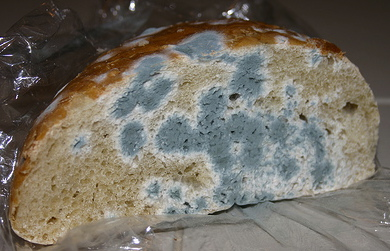 Dietary exposure to mycotoxins through the consumption of commercial bread loaf in Valencia, Spain Image