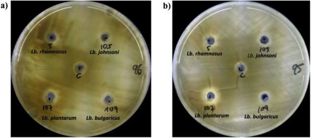 In vitro antifungal activity of bioactive peptides produced by Lactobacillus plantarum against Aspergillus parasiticus and Penicillium expansum Image
