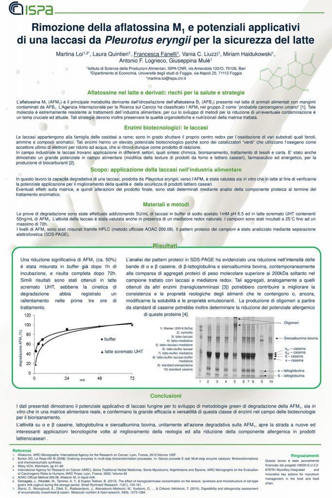 Rimozione della aflatossina M1 e potenziali applicativi di una laccasi da Pleurotus eryngii per la sicurezza del latte Image