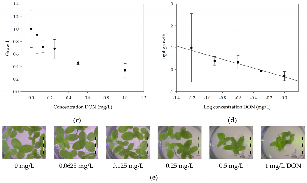 Microbial Detoxification of Deoxynivalenol (DON), Assessed via a Lemna minor L. Bioassay, through Biotransformation to 3-epi-DON and 3-epi-DOM-1 Image