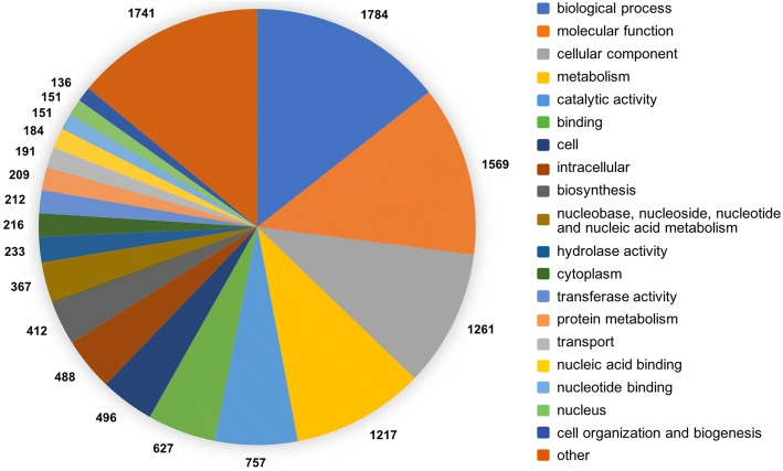 Genomic characterization of Trichoderma atrobrunneum (T. harzianum species complex) ITEM 908: insight into the genetic endowment of a multi-target biocontrol strain Image