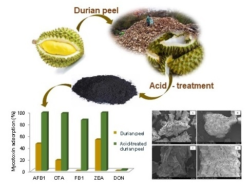 The Effectiveness of Durian Peel as a Multi-Mycotoxin Adsorbent Image