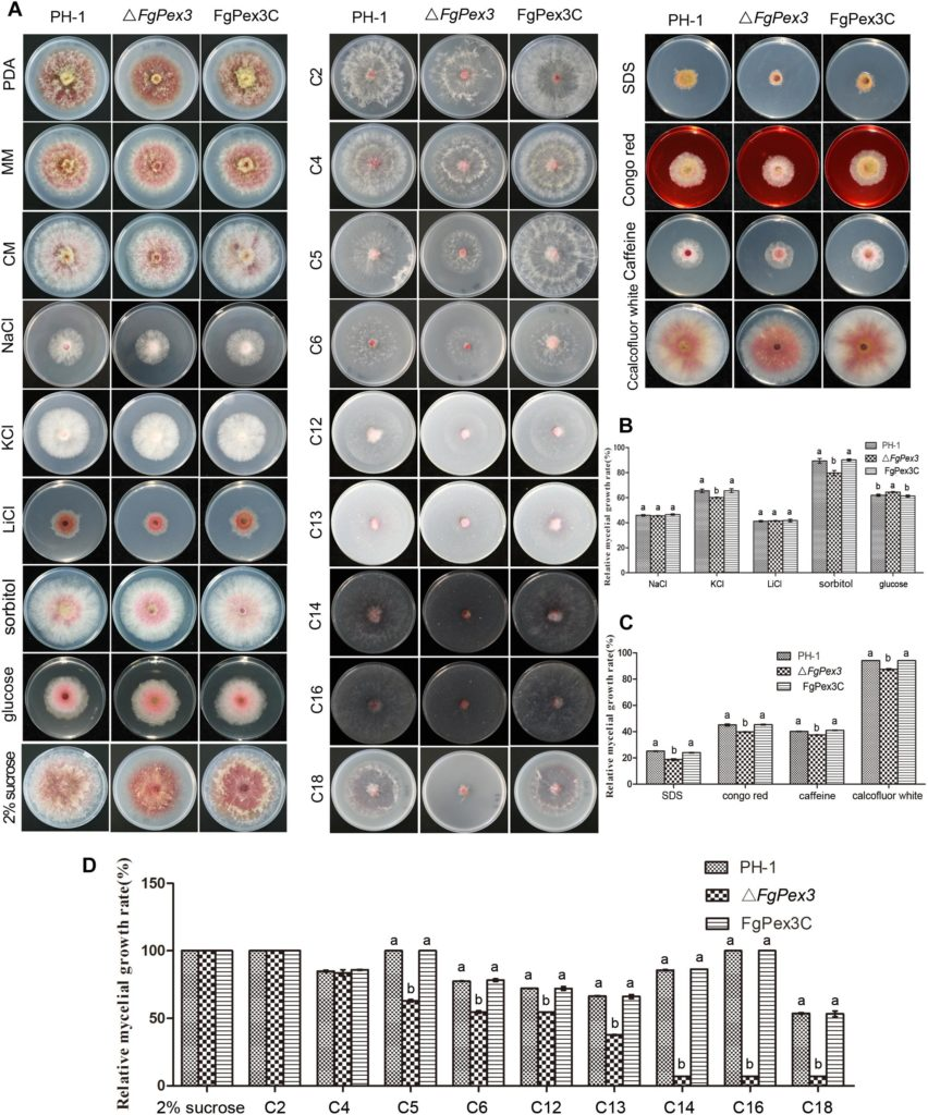 FgPex3, a Peroxisome Biogenesis Factor, Is Involved in Regulating Vegetative Growth, Conidiation, Sexual Development, and Virulence in Fusarium graminearum Image