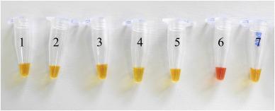 A loop-mediated isothermal amplification (LAMP) assay for rapid detection of fumonisin producing Aspergillus species Image