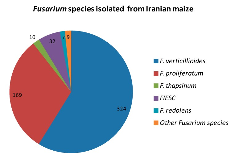 Isolation, Molecular Identification and Mycotoxin Profile of Fusarium Species Isolated from Maize Kernels in Iran Image